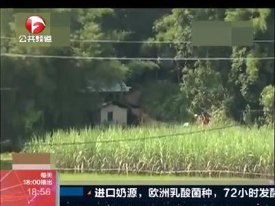 广西:10岁女孩卖百香果归来遇害  离家不到300米