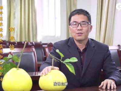 梁平区农委农业技术服务中心副主任刘兆俊代言家乡名柚
