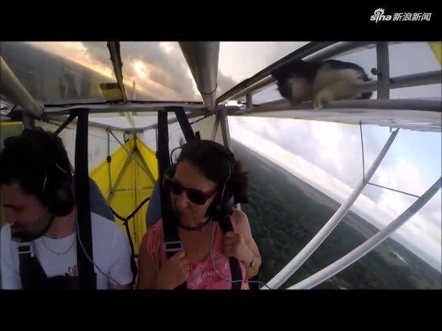 """视频:小猫咪""""偷乘""""飞机升空 惊呆驾驶员"""