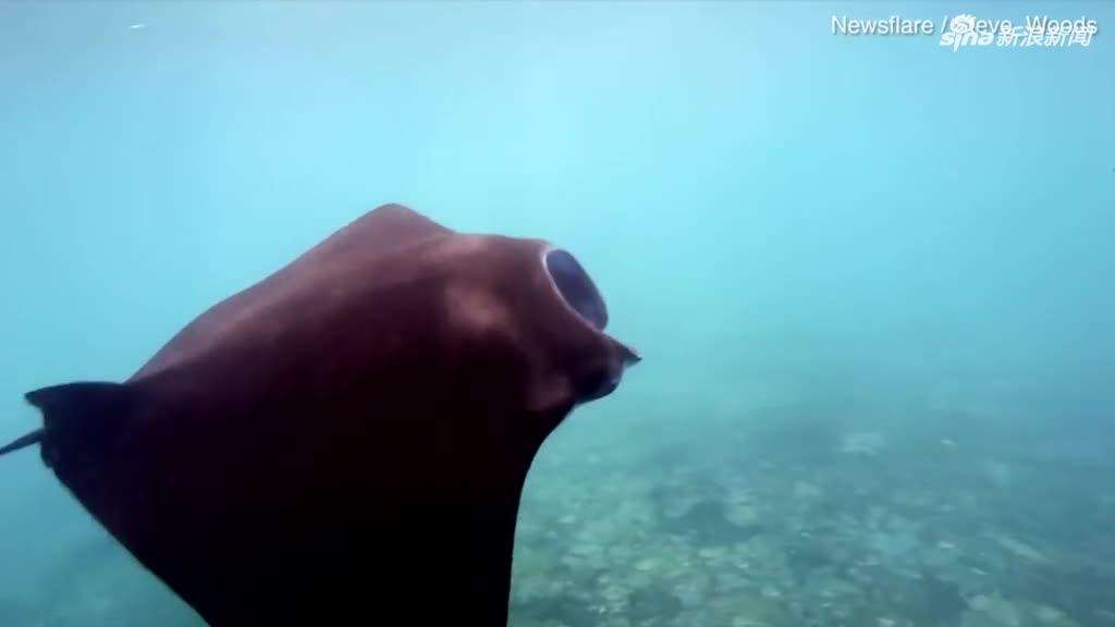 视频 巴厘岛蝠鲼在垃圾成堆的海域中穿梭 还吞下了