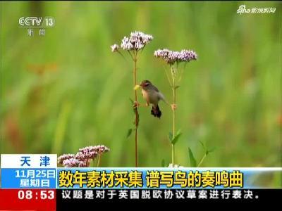《朝闻天下》天津:数年素材采集  谱写鸟的奏鸣曲