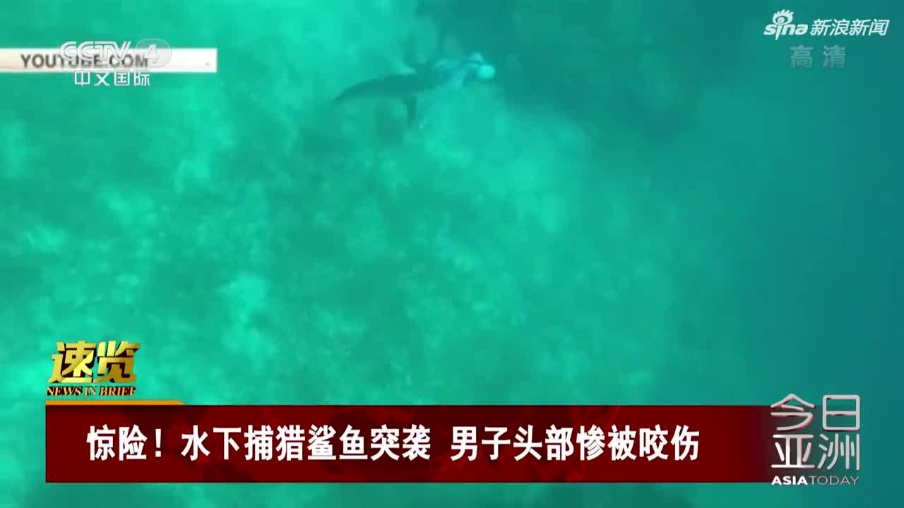 视频:惊险!男子水下捕猎 遭鲨鱼突袭撕咬头部
