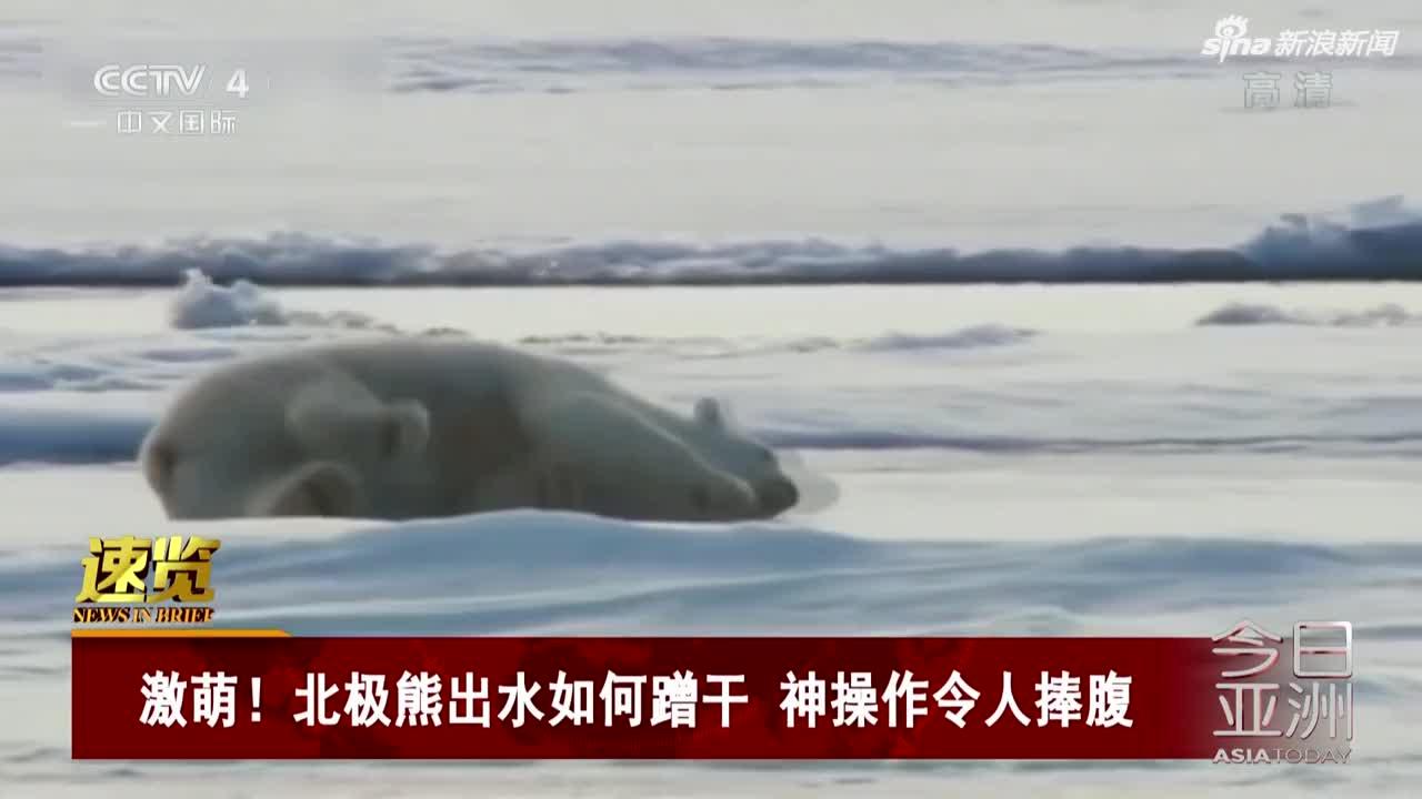 视频:激萌!北极熊出水如何蹭干 神操作令人捧腹