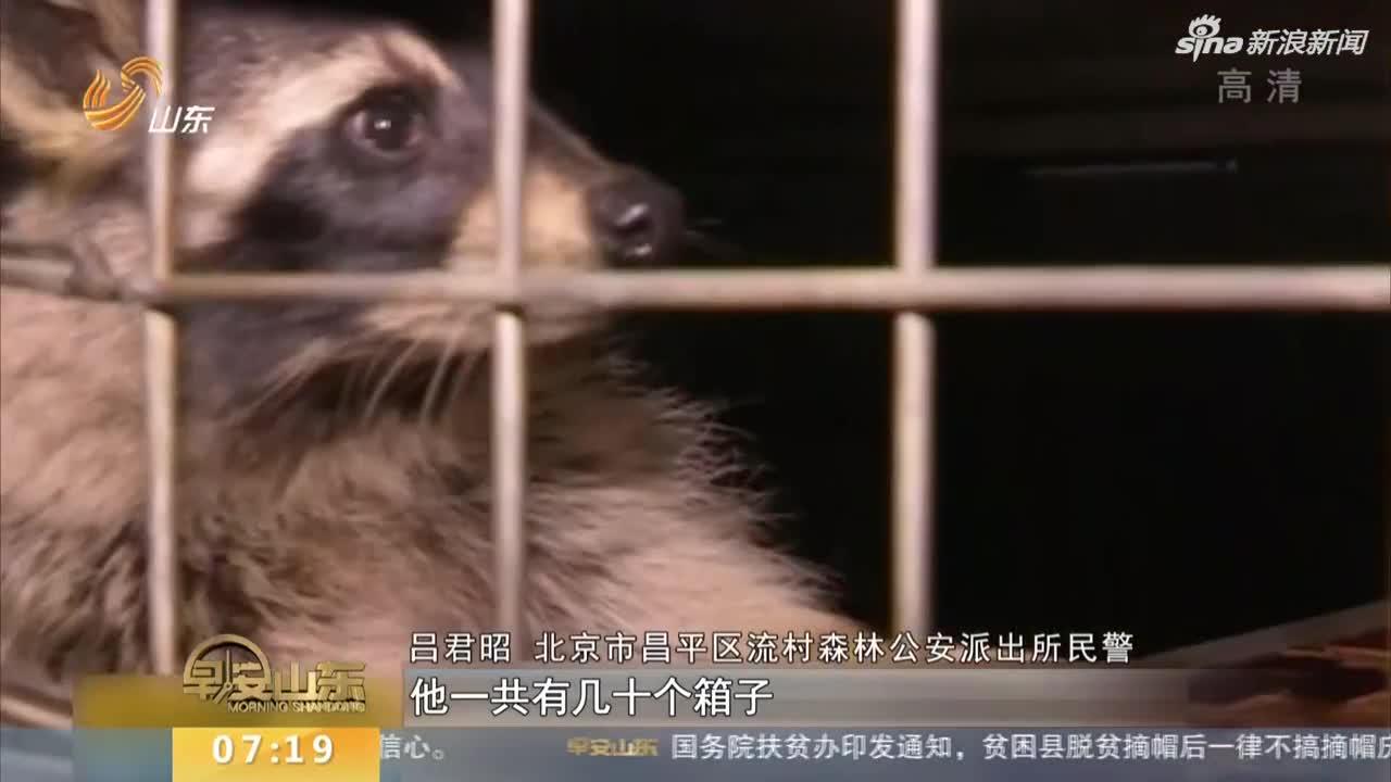 """视频-居民酷爱动物  私自将楼顶建成""""动物园"""""""