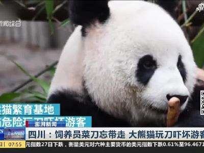 《上海早晨》四川:饲养员菜刀忘带走  大熊猫玩刀吓坏游客