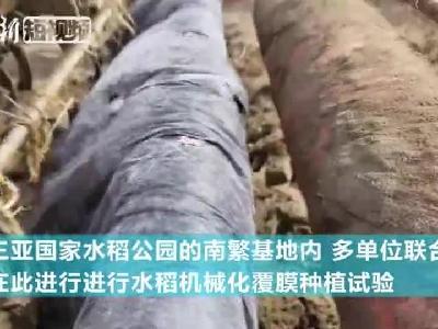 """袁隆平""""超级稻""""在三亚播种 有望再创单产历史新高"""