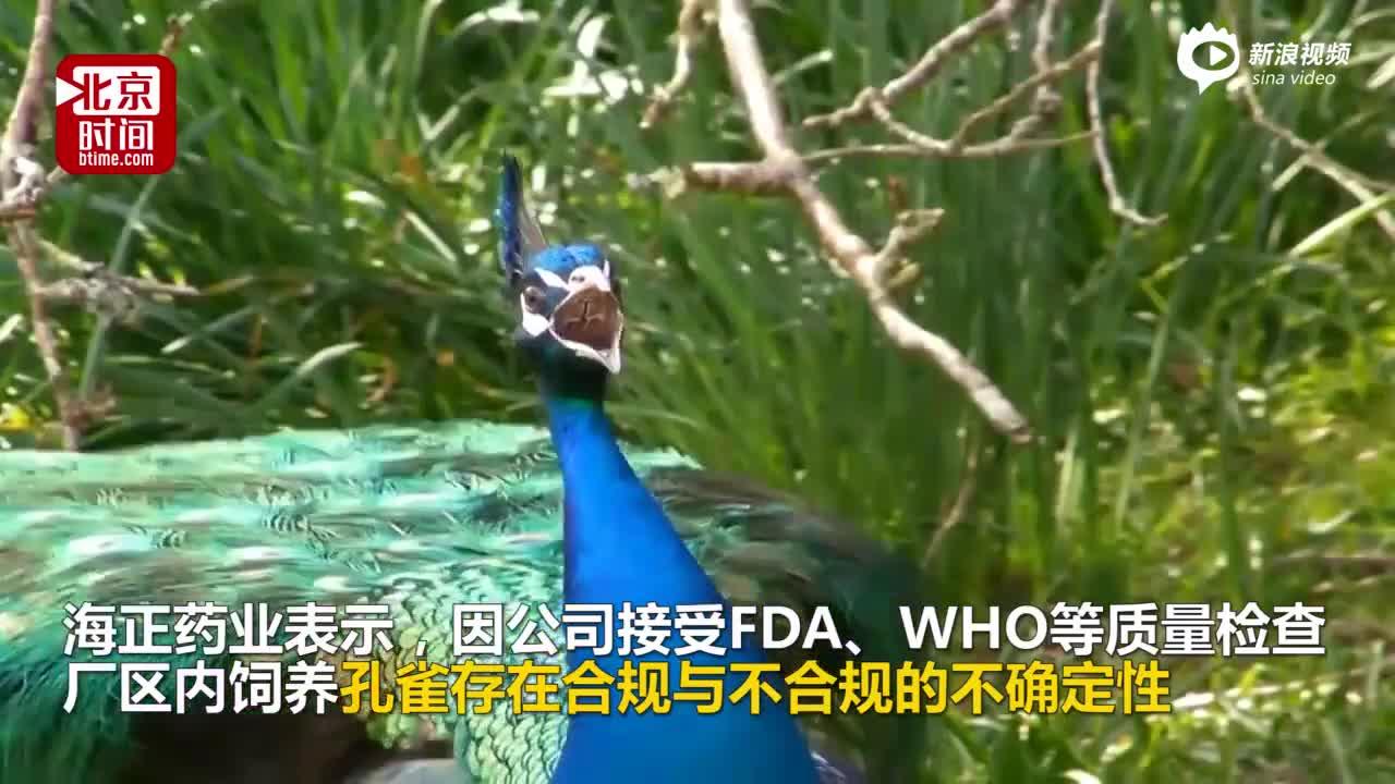 海正药业为应付质检甩卖23只孔雀 一天售罄进账1.5万