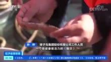 600171上海贝岭行情,2月12日上海鸡蛋市场行情动态