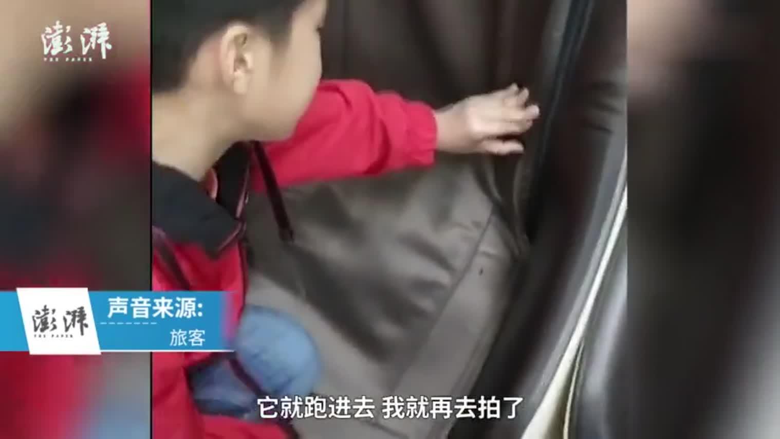 视频:慎点!车站按摩椅内蟑螂成群 或因食物落入