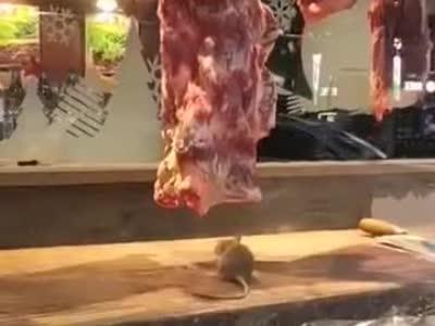 老鼠啃牛肉……