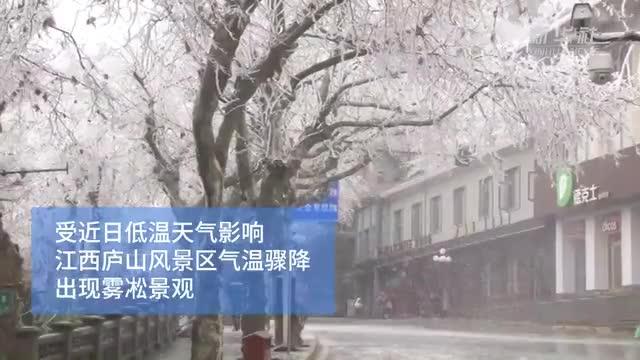 视频-美!来看江西庐山今冬雾凇首秀