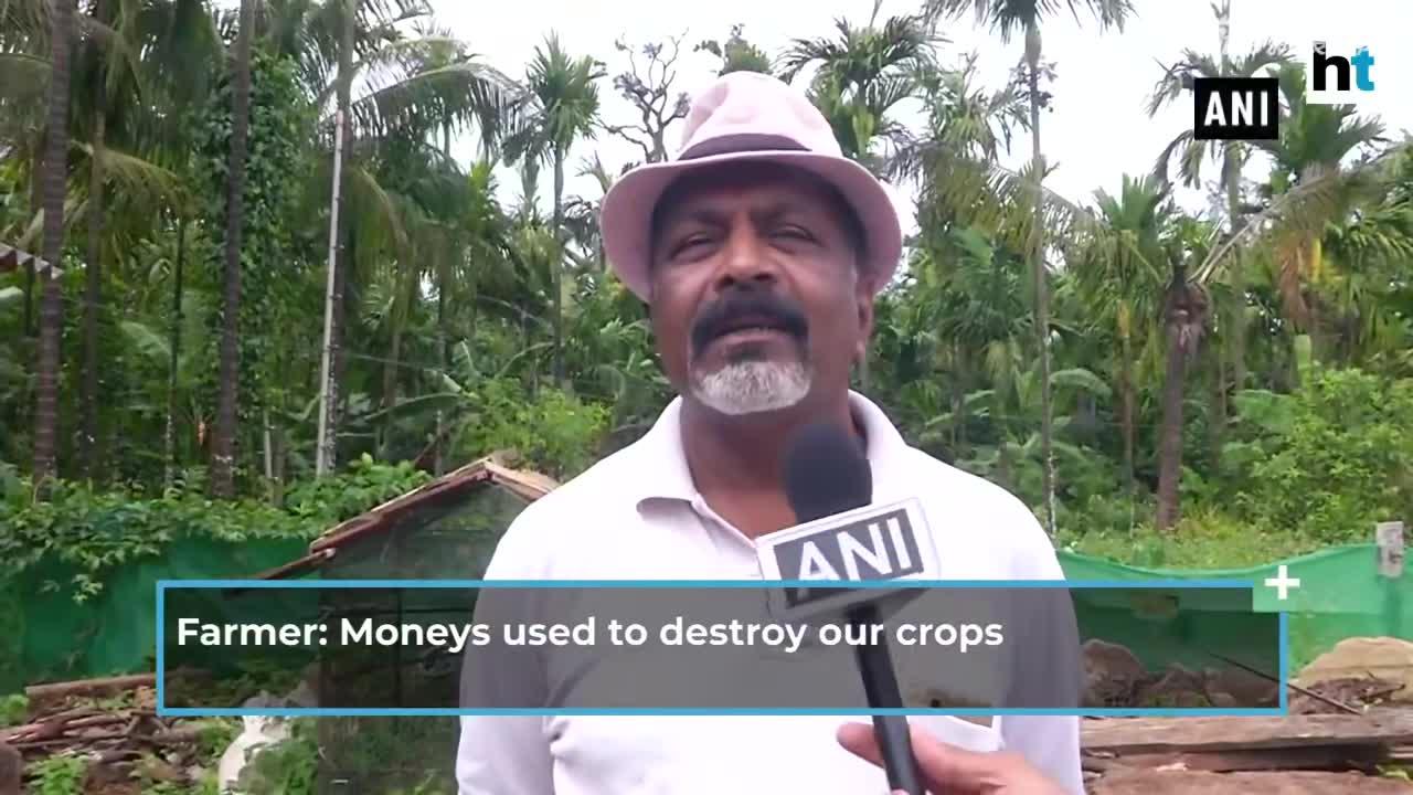 视频-猴子偷吃作物 男子将狗画成老虎阻止猴子偷吃