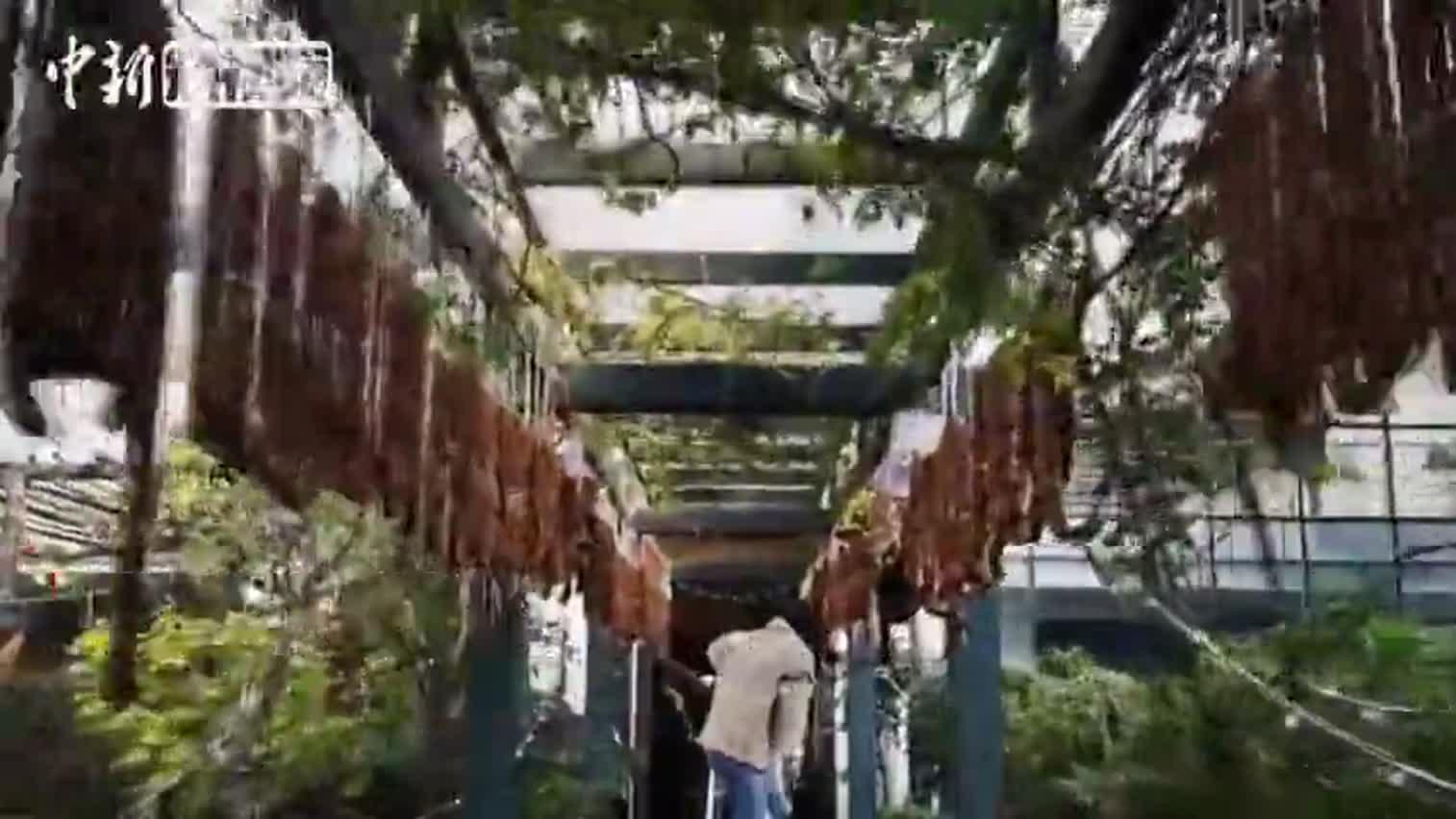 视频-成都50米长廊挂满香肠腊肠 网友:最土豪长