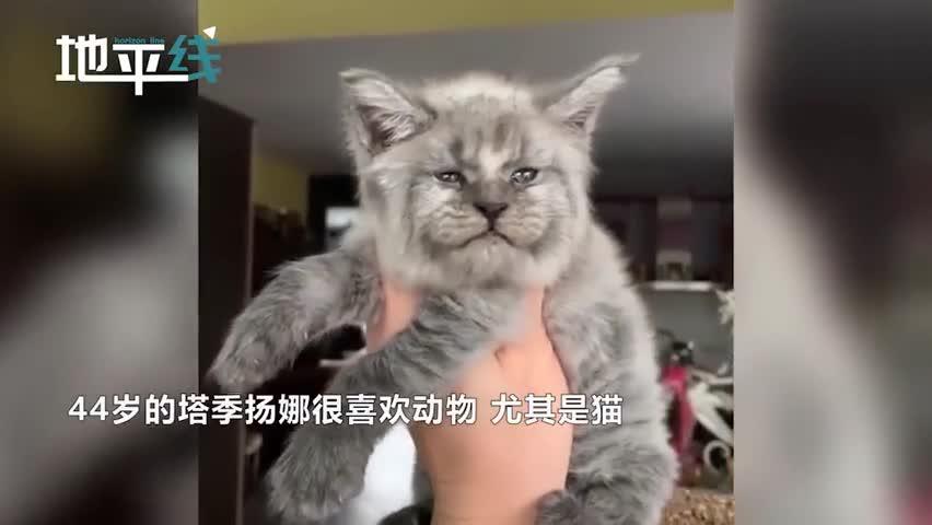 """视频-俄罗斯猫科专家培育出一窝""""人脸猫""""  眼神"""
