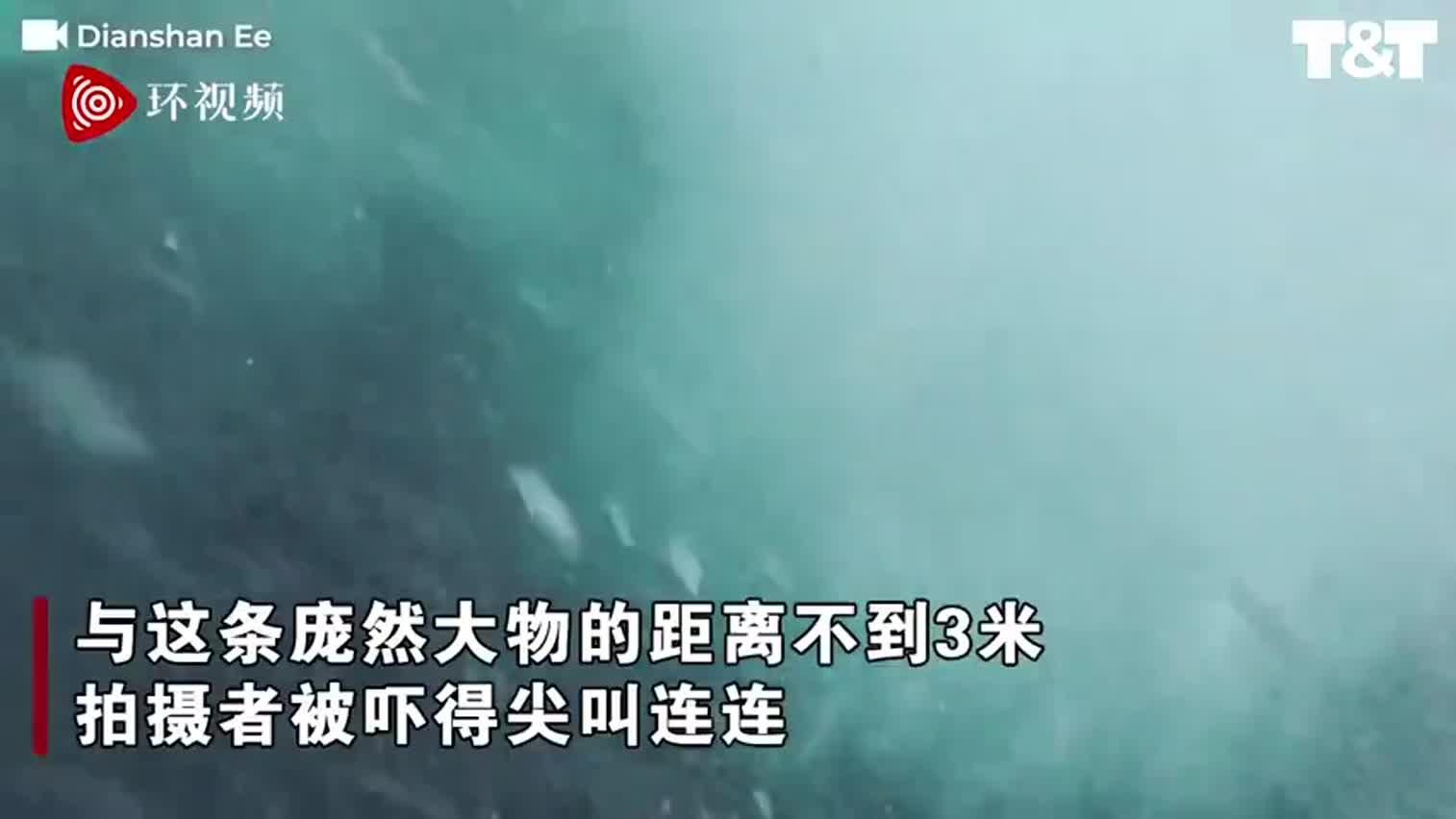 视频-鲸鱼冲出水面险撞上潜水员 距离不到3米
