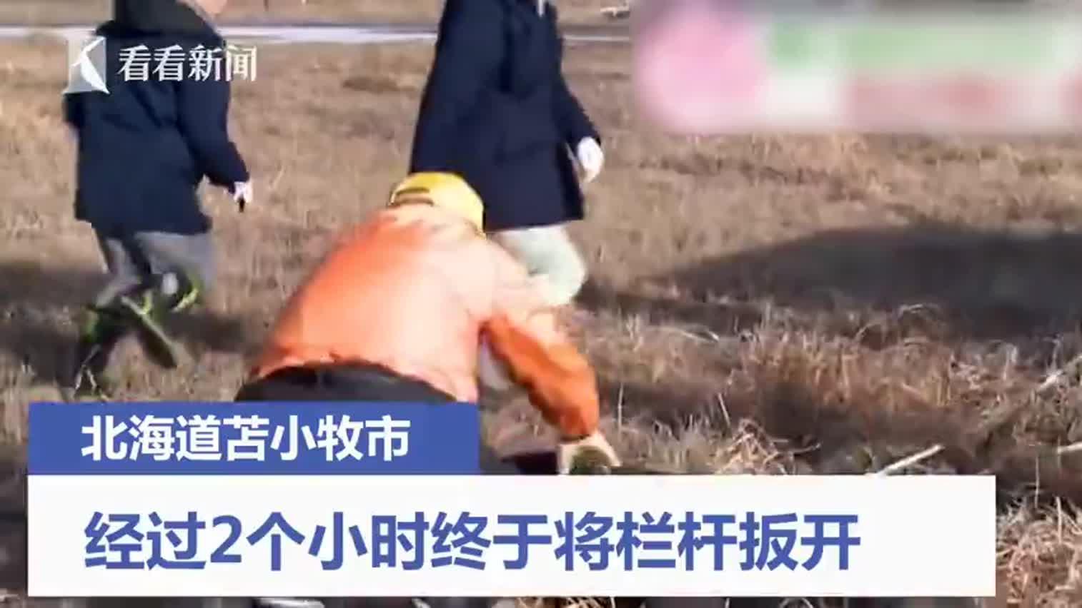视频-北海道小鹿屁股被卡栏杆 一张厌世脸坐等救援