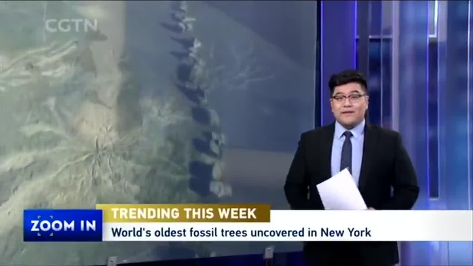 视频-美国纽约州发现世界最古老化石森林 距今3.