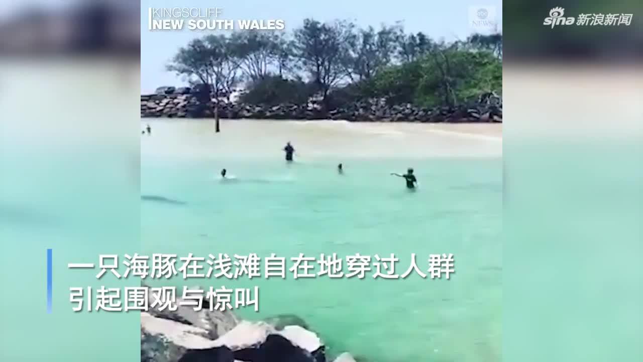 视频-海豚浅滩中自在游泳 穿过人群引起围观