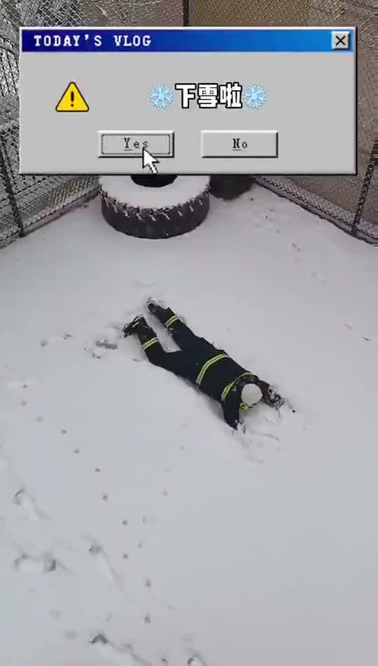 视频|南方消防员第一次见雪:疯狂躺地摩擦!