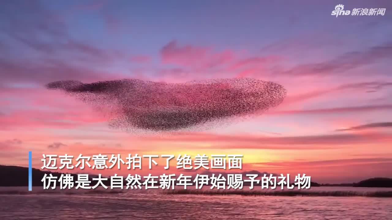 视频-惊艳!爱尔兰绚丽的落日余晖里 一群椋鸟在盘