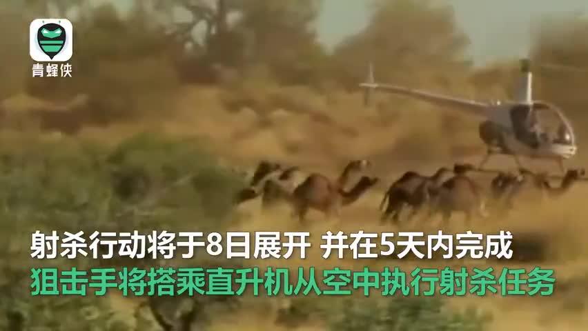 视频-5亿多动物丧生火海 澳政府宣布将射杀1万头