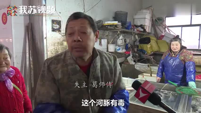 视频-29斤河豚不见老板急得报警:未经处理 怕出