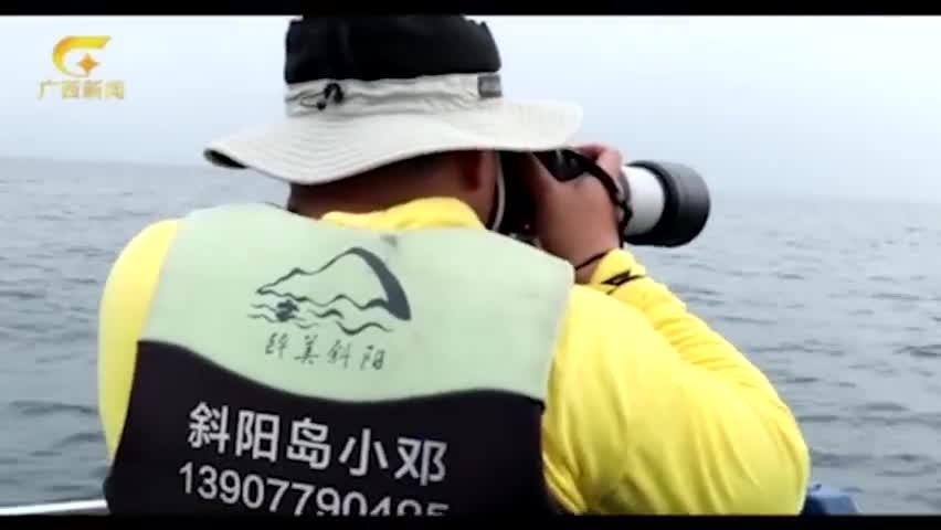 视频:国内首次拍摄到布氏鲸水下影像