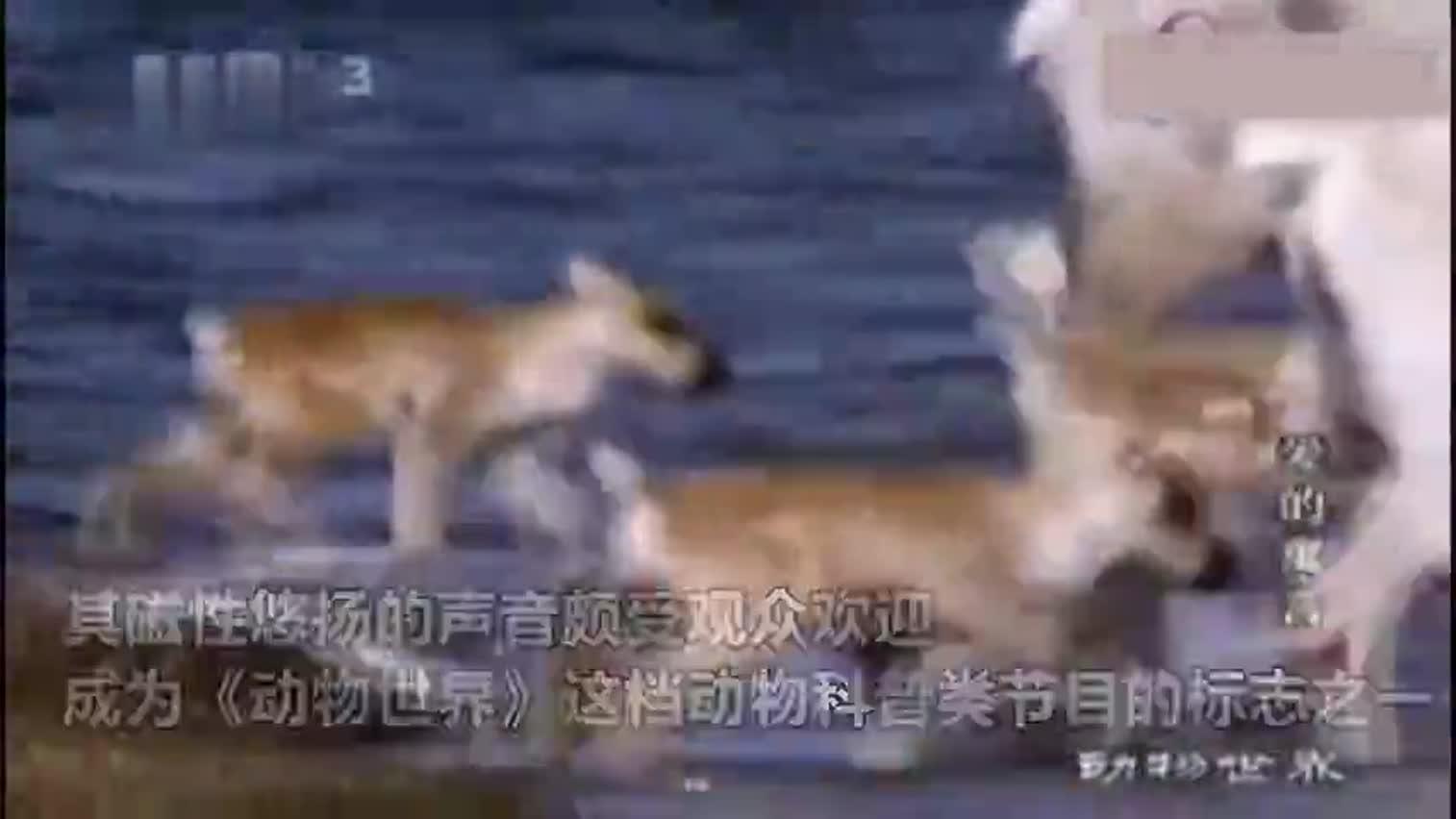 视频-1分钟回顾赵忠祥生前经典影像 再听一次《动