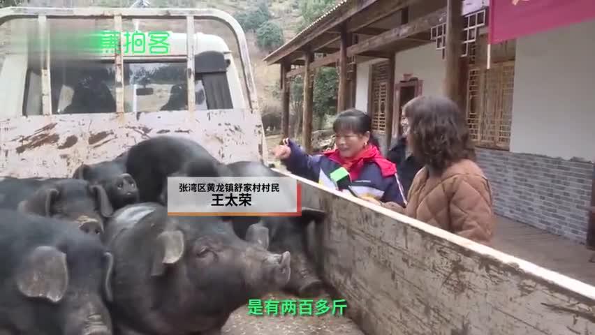 视频-实在!农场老板给贫困员工每人发头猪