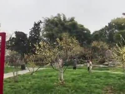 """武汉东湖梅花节开幕,园内""""梅祖宗""""树龄高达八百余年"""