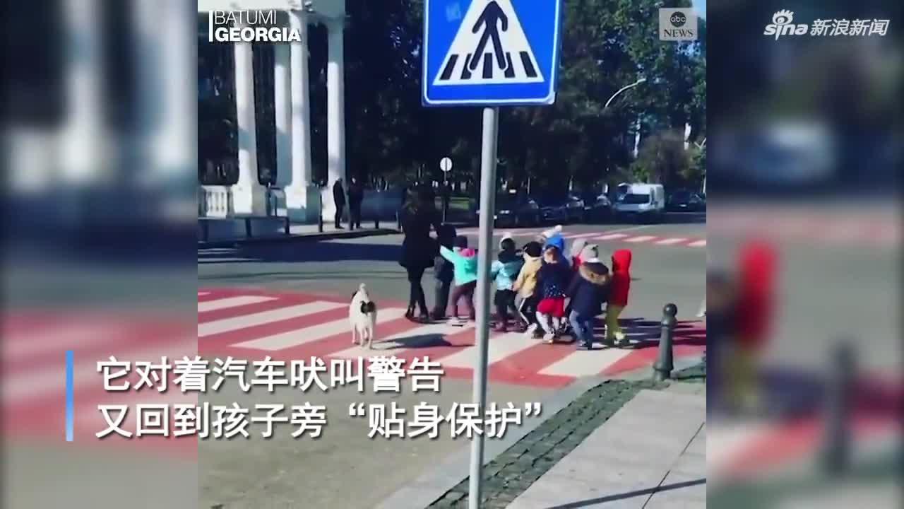 视频-流浪狗冲汽车狂吠 护送孩子们安全过马路