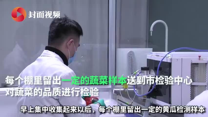 视频-连夜采摘!首批350吨寿光蔬菜捐送武汉