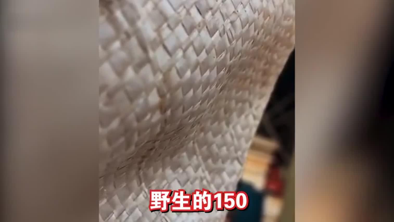 视频|广州农贸市场仍偷卖野生动物:黑帐篷内隐藏