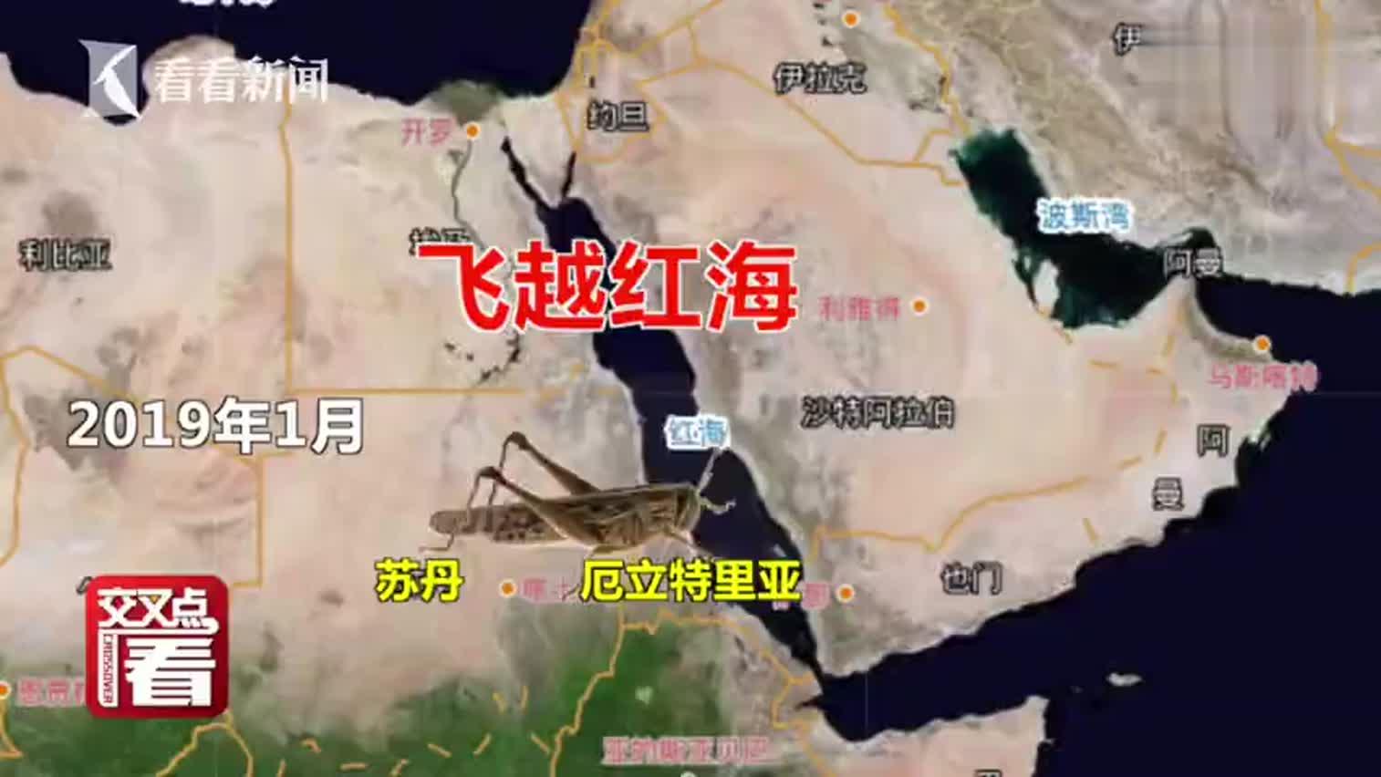 视频 印巴边境4000亿只蝗虫向中国逼近