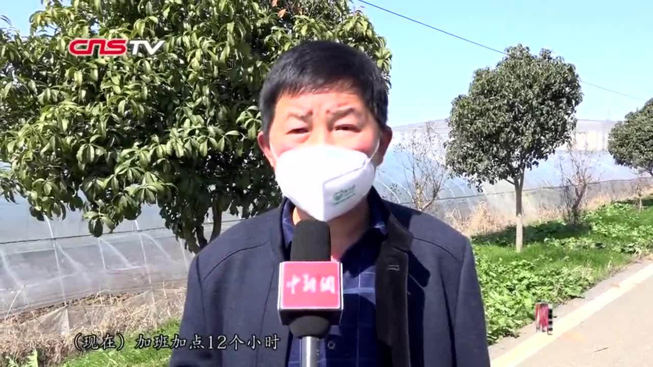 视频-探访武汉一蔬菜基地:新鲜蔬菜12小时内送上