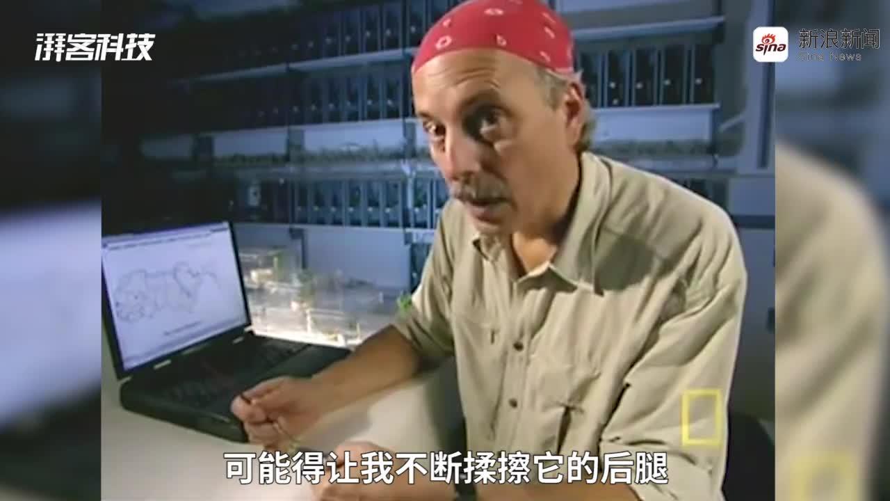 """视频-沙漠蝗虫聚集的奥秘:摩擦""""变形"""""""