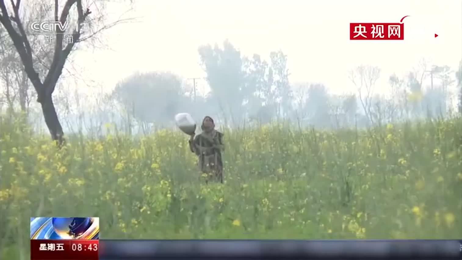 视频|巴基斯坦村民敲铁盆驱赶蝗虫 虽然比较管用但