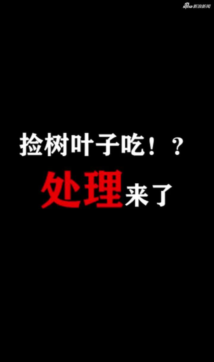 """视频 鄂州警方辟谣""""老人捡树叶吃"""":两人虚构事实"""