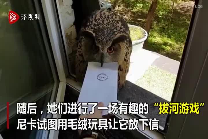 """视频-俄罗斯一只猫头鹰""""送信""""  送到后拒绝""""放"""