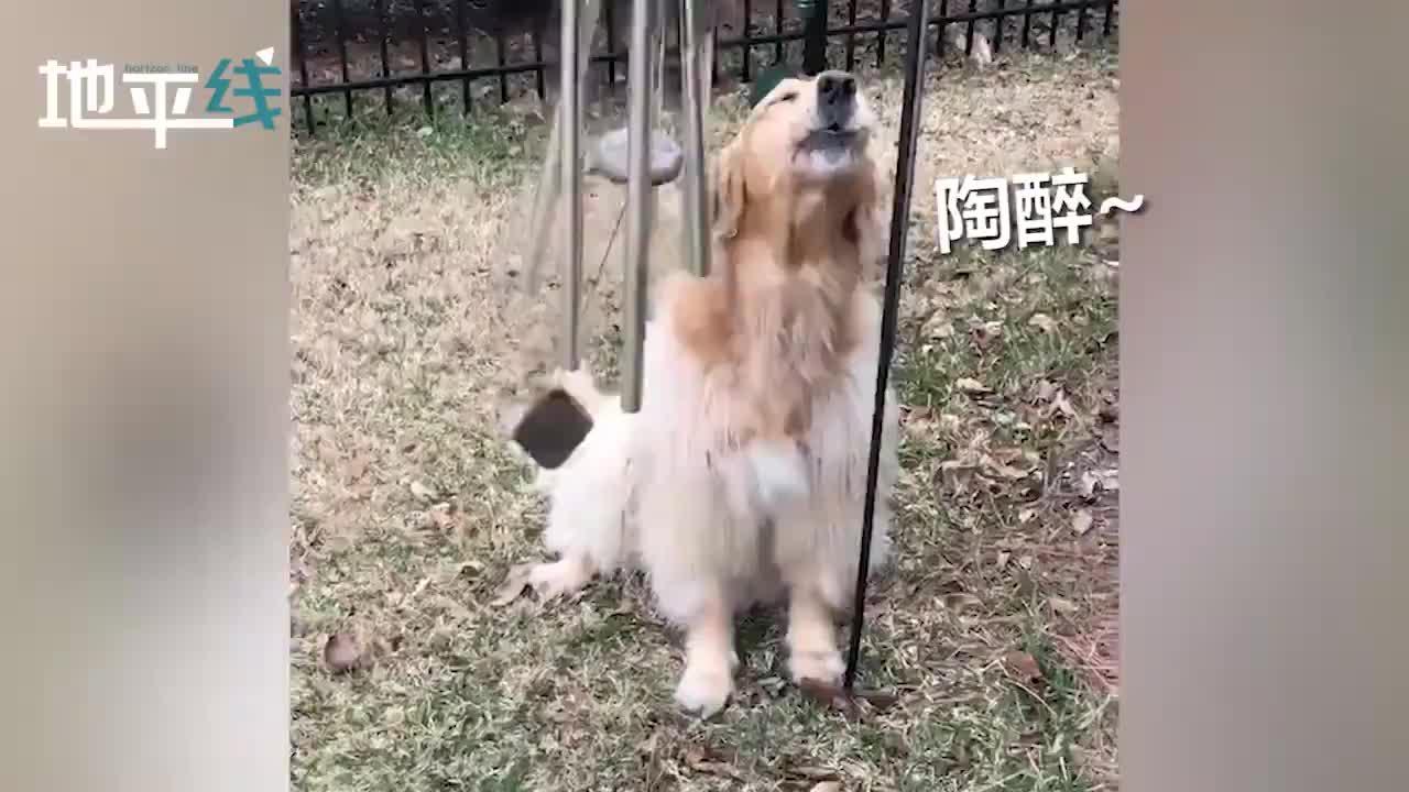 """视频-可爱!美国一只狗狗边用头演奏风铃边""""深情歌"""
