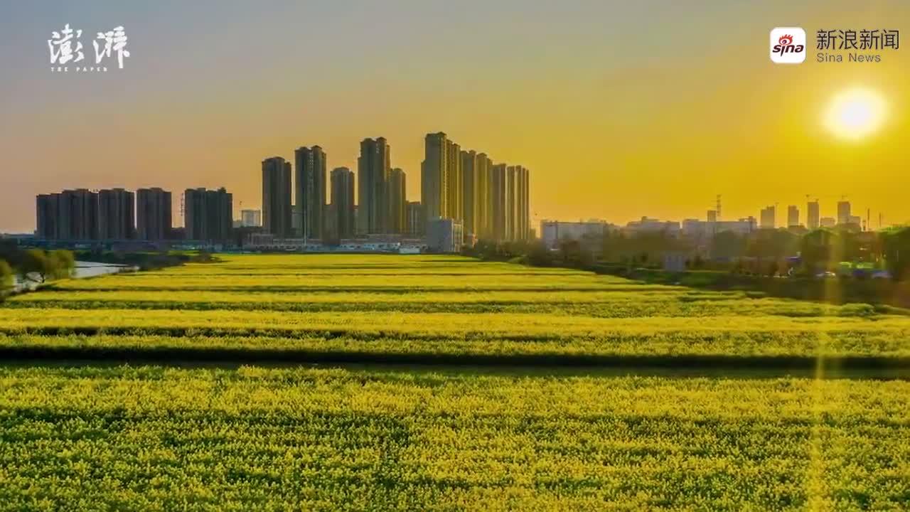 视频-美如画!安徽安庆47万亩油菜花开了