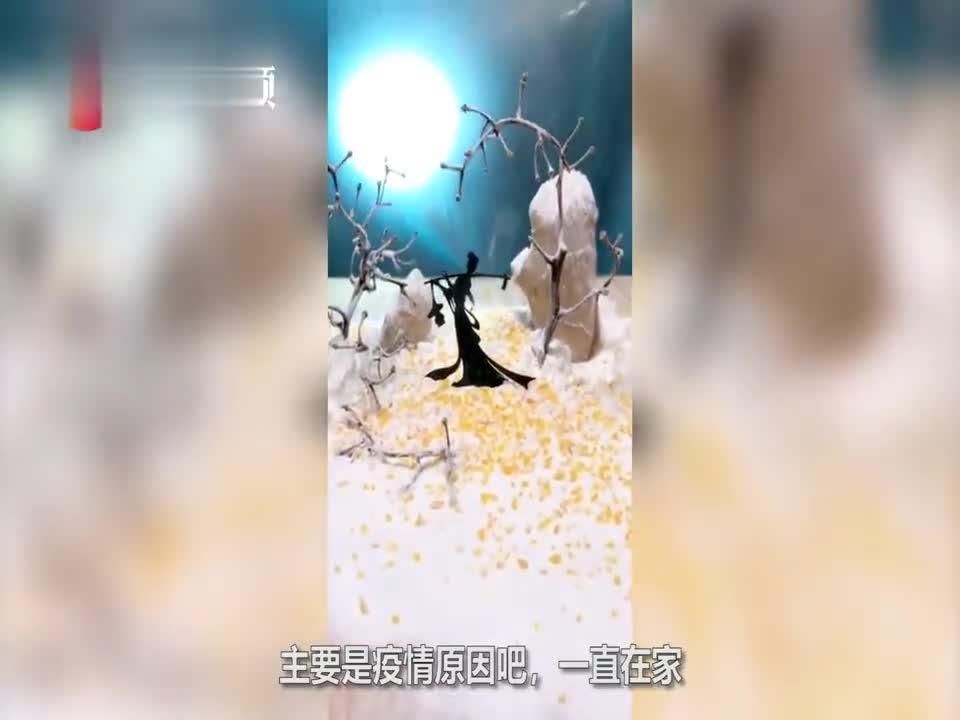 视频-宅家男子用蔬菜拍大片:生姜面粉葡萄梗神还原