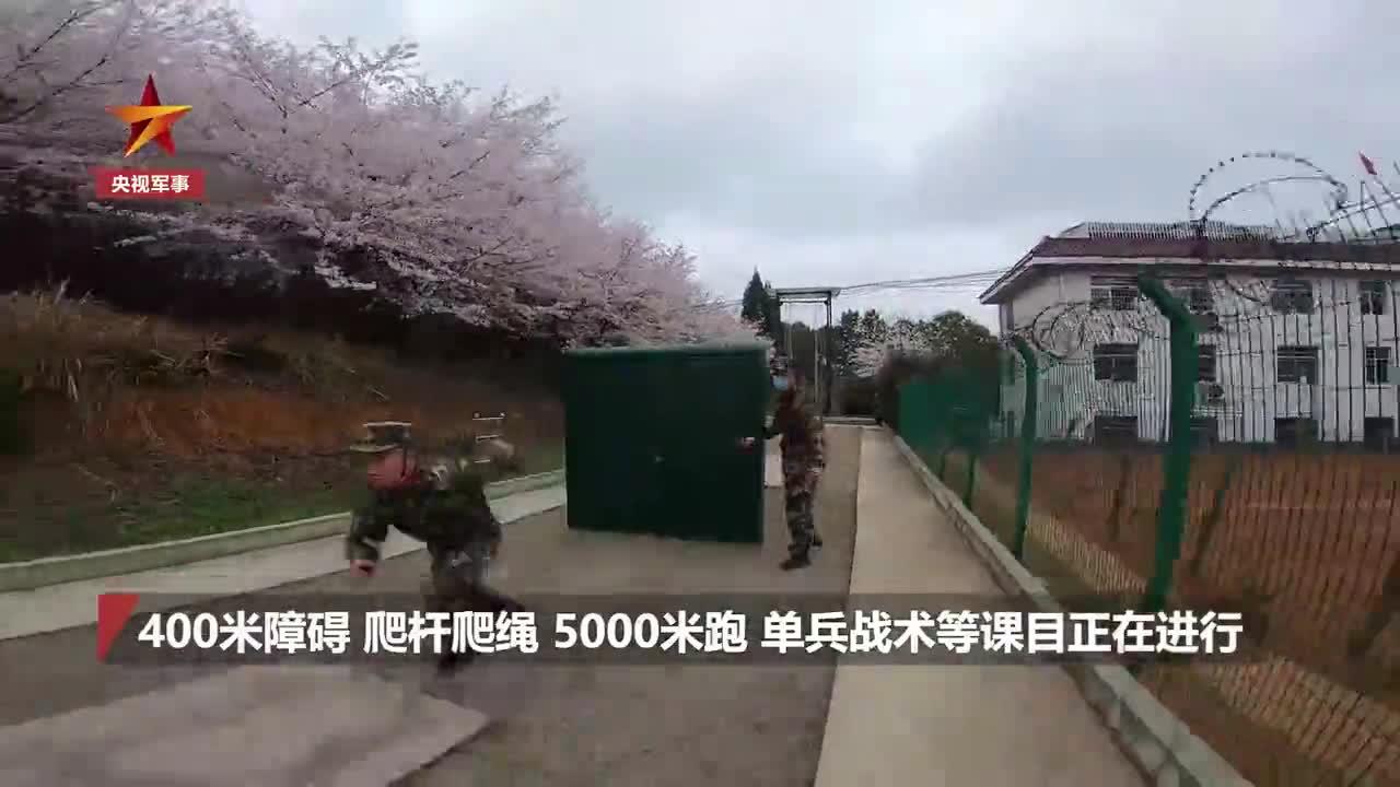 视频:浪漫又硬核!武警万亩樱花林中练兵