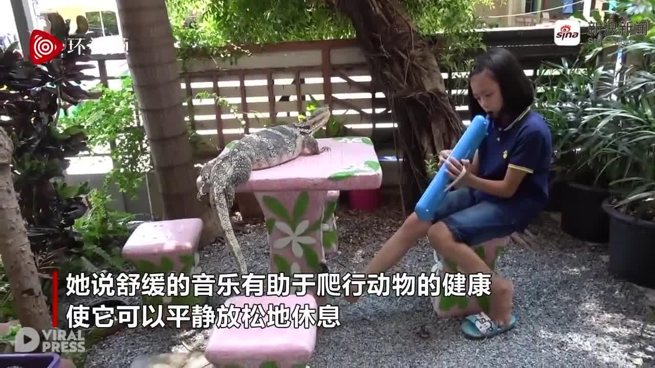 视频-泰国女孩给近一米长蜥蜴演奏音乐 称能让它平