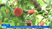 [第一时间]北京:大桃丰收 电商销售火爆