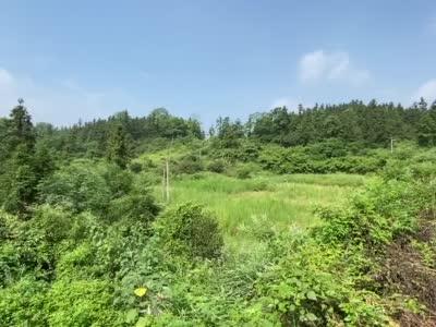 """在路上丨邵阳县油斯村:脱贫的必""""油""""之路"""