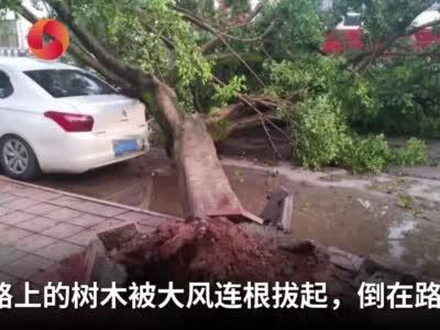 实拍四川资阳8级狂风:宵夜摊位差点被吹跑 路边大树被连根拔起