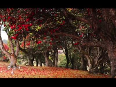 临沧市文化和旅游局文旅系列歌曲MV之《大美临沧》