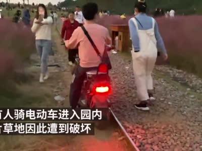 武汉一公园网红草地遭游人破坏,保安称管不过来很无奈