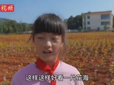 美哭了!宜春一小学校长为学生种下一片花海